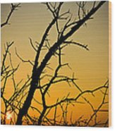 Branches Reaching The Sunset Wood Print
