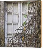 Branchy Window Wood Print