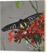 Brazilian Moth Wood Print