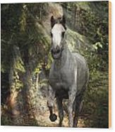 Breaking Dawn Gallop Wood Print