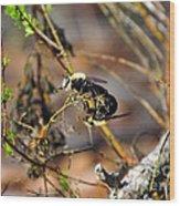 Breeding Bees Wood Print