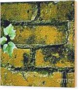 Brick Ivy Wood Print