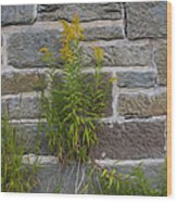 Brick Wall Flowers Wood Print