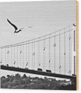 Bridge And Seagull, Bosphorus, Istanbul, Turkey Wood Print