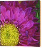 'bright Beauty' Wood Print by Tanya Jacobson-Smith
