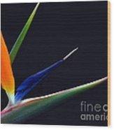 Bright Bird Of Paradise Rectangle Frame Wood Print