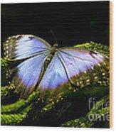 Bright Blue  Wood Print by Leslie Leda