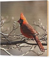 Bright Bold - Cardinal Wood Print