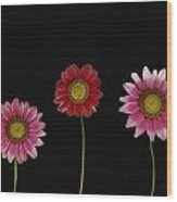 Bright Colorful Daisies Wood Print by Deddeda