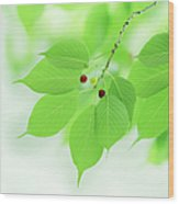 Bright Green Leaves Wood Print