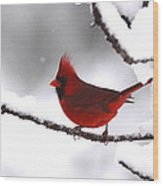 Bright In The Snow - Cardinal Wood Print