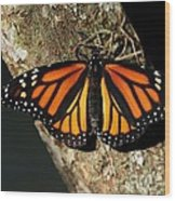 Bright Orange Monarch Butterfly Wood Print