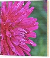Bright Pink Dahlia Wood Print