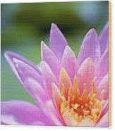 Bright Pink Water Lily II Wood Print