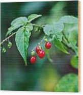 Bright Red Berries Wood Print