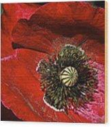 Bright Red Poppy Wood Print