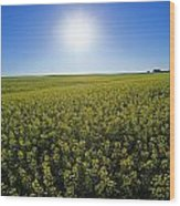Bright Sun And Bloom Stage Mustard Wood Print