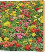 Brightly Colored Marigold Flowers Wood Print