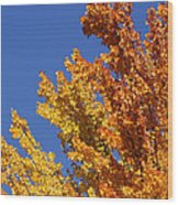 Brilliant Fall Color And Deep Blue Sky Wood Print