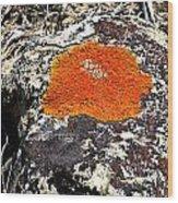 Brilliant Orange Lichen Wood Print