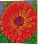 Brilliant Orange No. 2 Wood Print