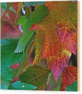 Brilliant Red Maple Leaves Wood Print