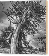 Bristlecone Patriarch  Wood Print