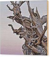 Bristlecone Pine - Early Morning - 1 Wood Print