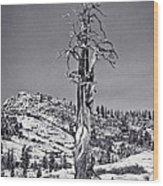 Bristlecone Pine - High Sierra Wood Print