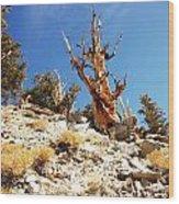 Bristlecone Skeleton Wood Print