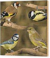 British Garden Birds Wood Print