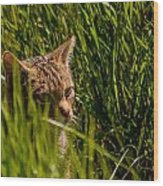 British Wild Cat Wood Print