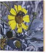 Brittlebush Bee Wood Print