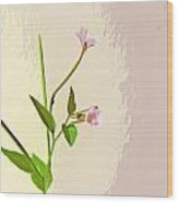 Broad Leaf Willow Herb Wood Print