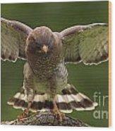 Broad Winged Hawk Wood Print