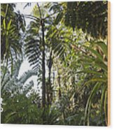 Bromeliad And Tree Ferns  Wood Print by Cyril Ruoso