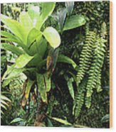 Bromeliad On Tree Trunk El Yunque National Forest Wood Print