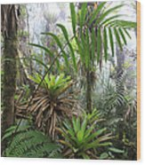 Bromeliads And Tree Ferns  Wood Print by Cyril Ruoso