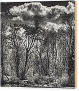 Brook Lake In The West Hylebos Wetlands Wood Print