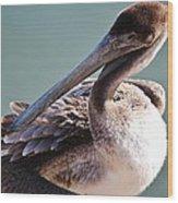Browm Pelican Up Close Wood Print