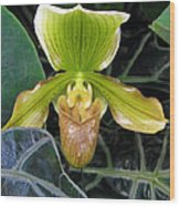 Brown And Green Orchid Amid Leaves Wood Print