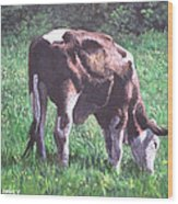 Brown And White Cow Eating Grass Wood Print