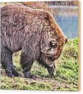 Brown Bear 201 Wood Print