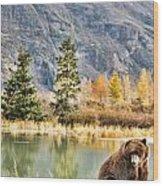 Brown Bear 206 Wood Print