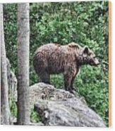 Brown Bear 208 Wood Print