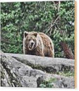 Brown Bear 209 Wood Print