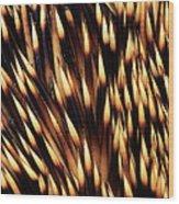 Brown-breasted Hedgehog Erinaceus Wood Print