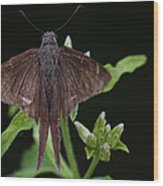 Brown Butterfly Dorantes Longtail Wood Print