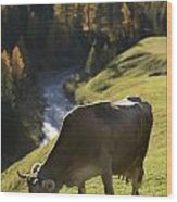 Brown Cow Alps Wood Print