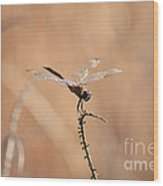 Brown Dragonfly And Brown Reeds Wood Print